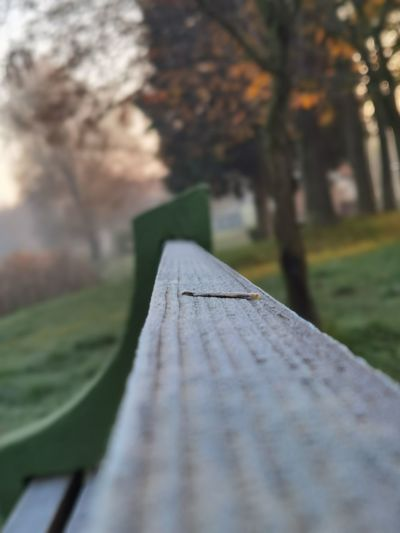 Close-up of park bench