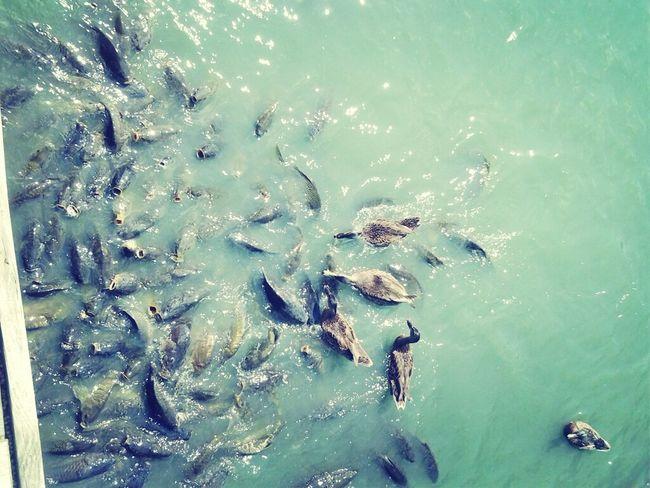 Greedy Fish From Yesterday