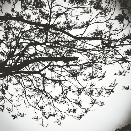 Like birds in the tree Trees Young Leaves