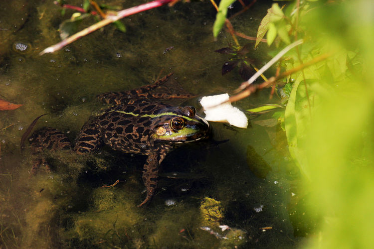 Animals In The Wild Frog Relaxing Animal Themes Animal Wildlife Beauty In Nature Lake Water