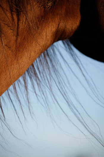 Horse mane close up