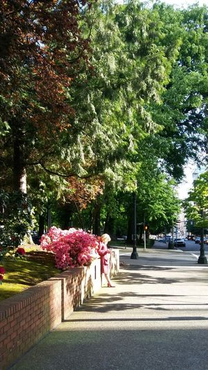 Chanced upon this perfectly matched flora and dress while walking to church in Portland. Pink Flowers Pink Dress Woman Park