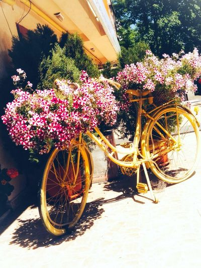 Flower Flowering Plant Plant Nature Transportation Mode Of Transportation Fragility Bicycle No People Outdoors Day Sunlight