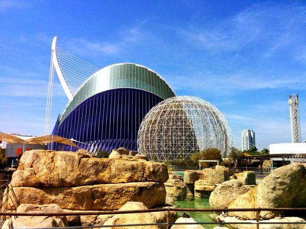 Living Bold València L'oceanografic