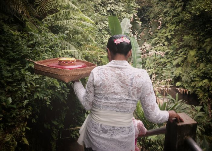 Bali Bali, Indonesia Cultures Culture Culture And Tradition Cultural Heritage Tradition Traditional Culture Prayer Prayers Woman Woman Power Womenoftheday Bali Culture Balinese Life Balinese Balinese Culture Balinesia Rear View Day One Person Real People Outdoors Women Only Women Adult One Woman Only Nature Tree