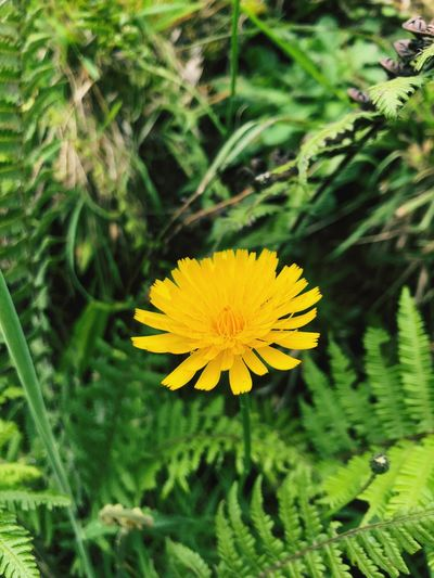 Sol Flower Flowering Plant Plant Growth Freshness Yellow Fragility Beauty In Nature Flower Head Nature Pollen Day Petal