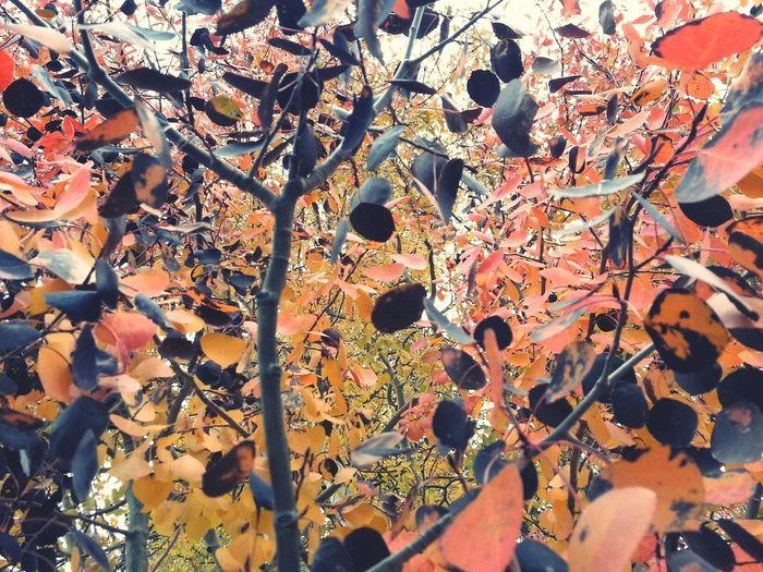 Dani Filter TreePorn Autumn Leaves