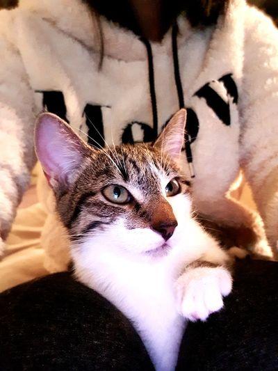 La beauté féline 😍 Portrait Pets Animal CalinsPilou Sofa Cat Croquette Love