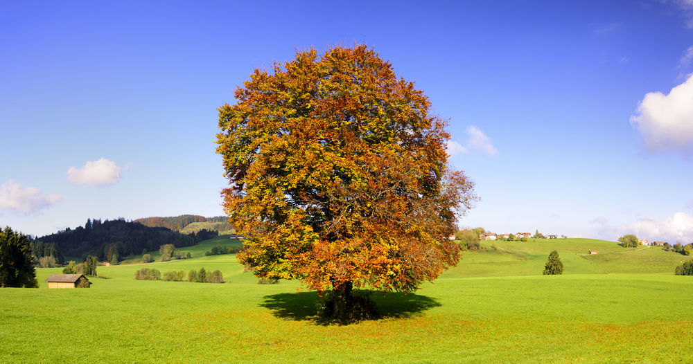 Tree on field during autumn