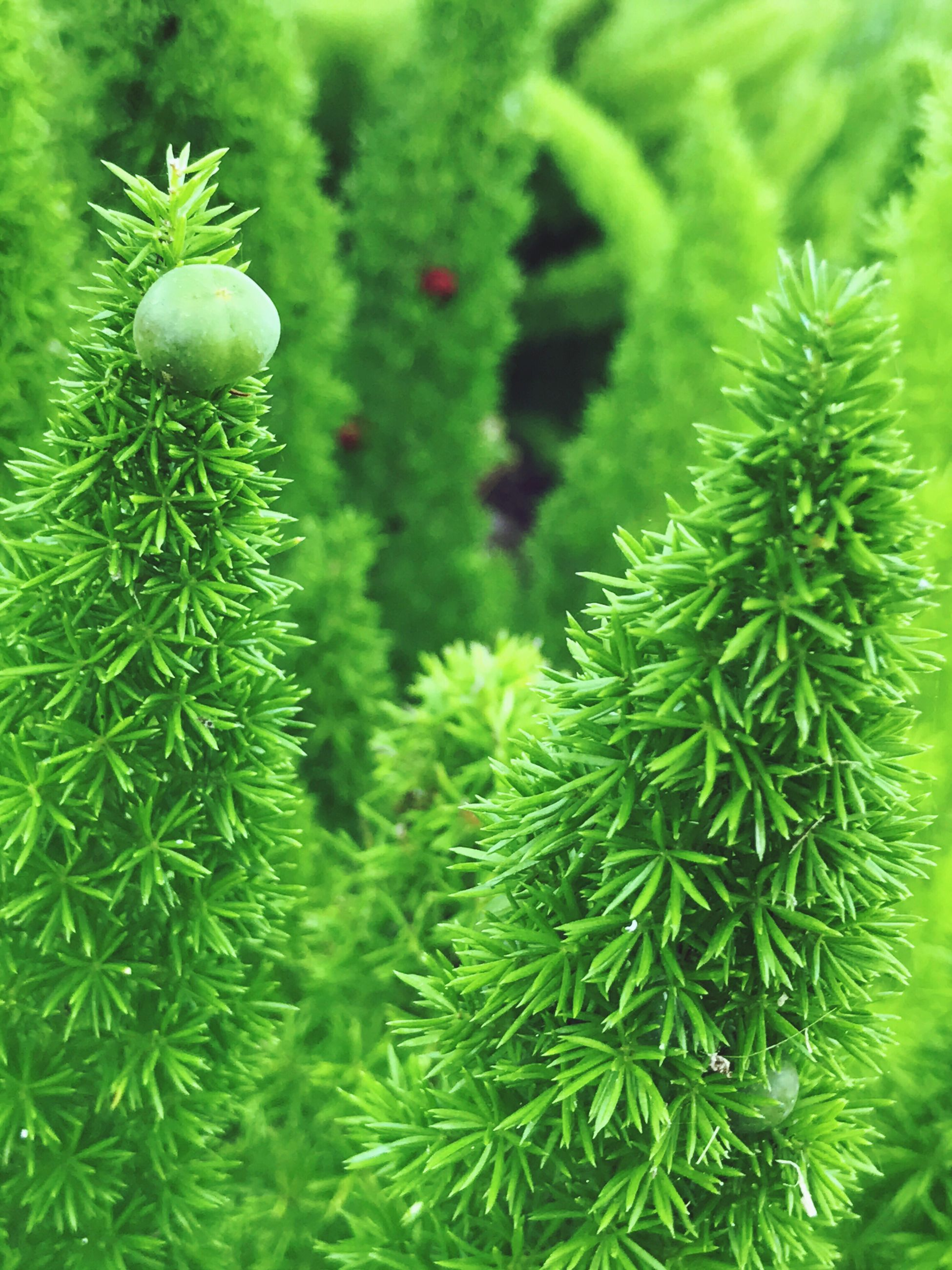 green color, growth, nature, plant, beauty in nature, close-up, no people, leaf, outdoors, day, freshness