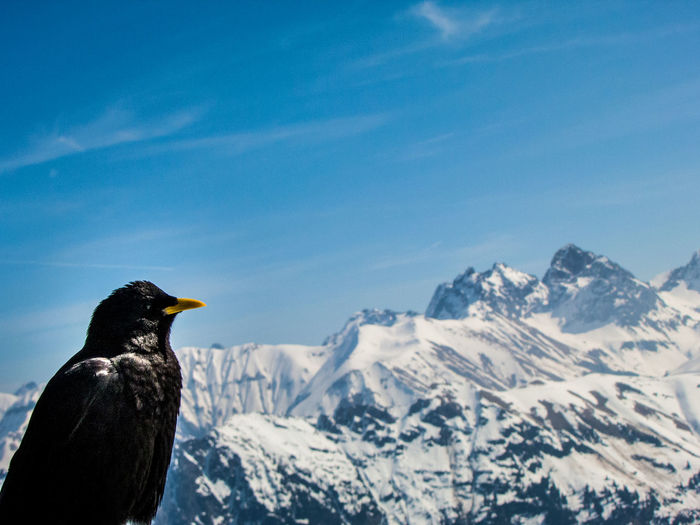 Bird on mountain against clear sky during winter