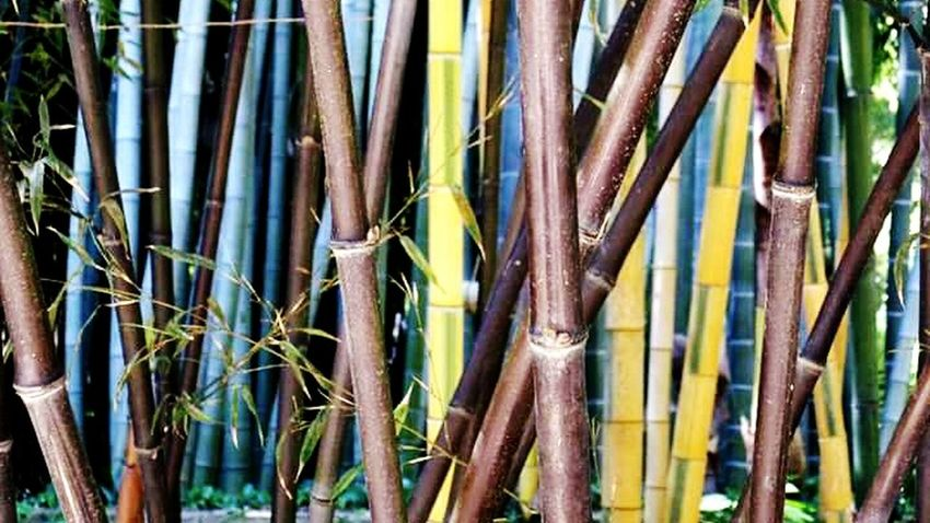 Bamboo Forest Anduze Colour Of Life