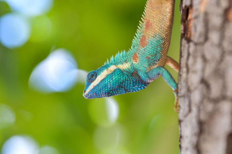 Close-Up Of Iguana On Tree Trunk