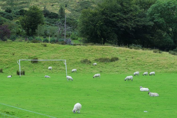The football pitch next next to isle of arran whisky distillery