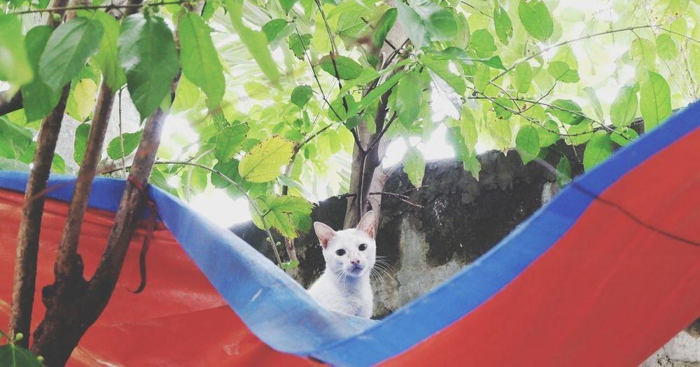 Portrait of dog hanging on tree