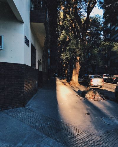 Tree Car Building Exterior Architecture Built Structure Outdoors No People City Nature Sky Day Sunshine Middle Divided Half Buenosaires Belgrano Street The Street Photographer - 2017 EyeEm Awards