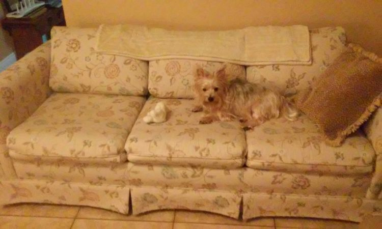 A Queen sleeper sofa my girlfriend gave me. Really nice Check This Out