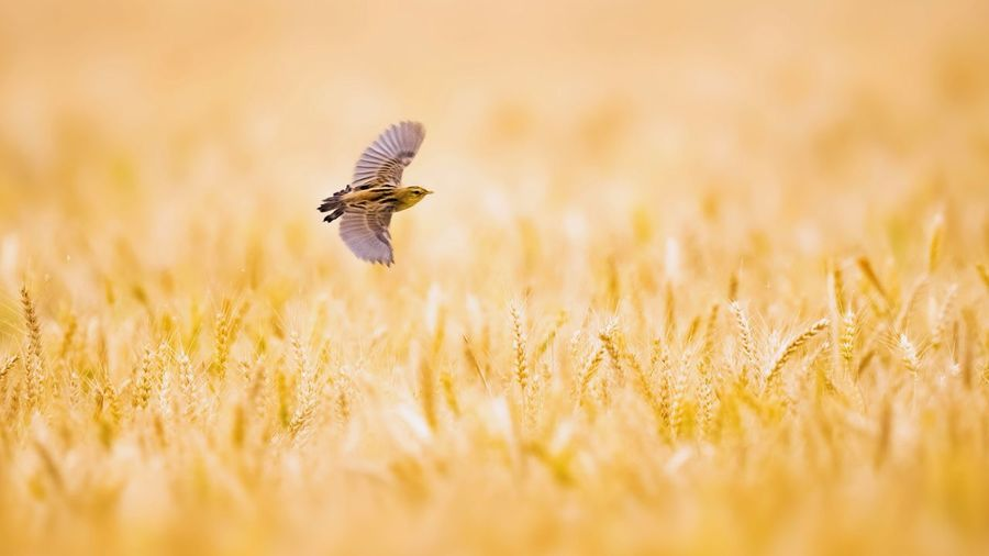 Close-up of a bird flying in the field