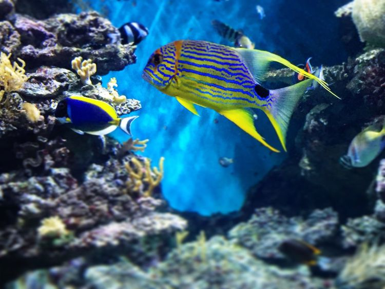 Water Swimming Animal Themes Fish Underwater Sea Life Nature Wildlife Animals In The Wild Multi Colored Blue Animal Markings Zoology UnderSea Close-up Sea Beauty In Nature EyeEm Best Shots Gregphoto