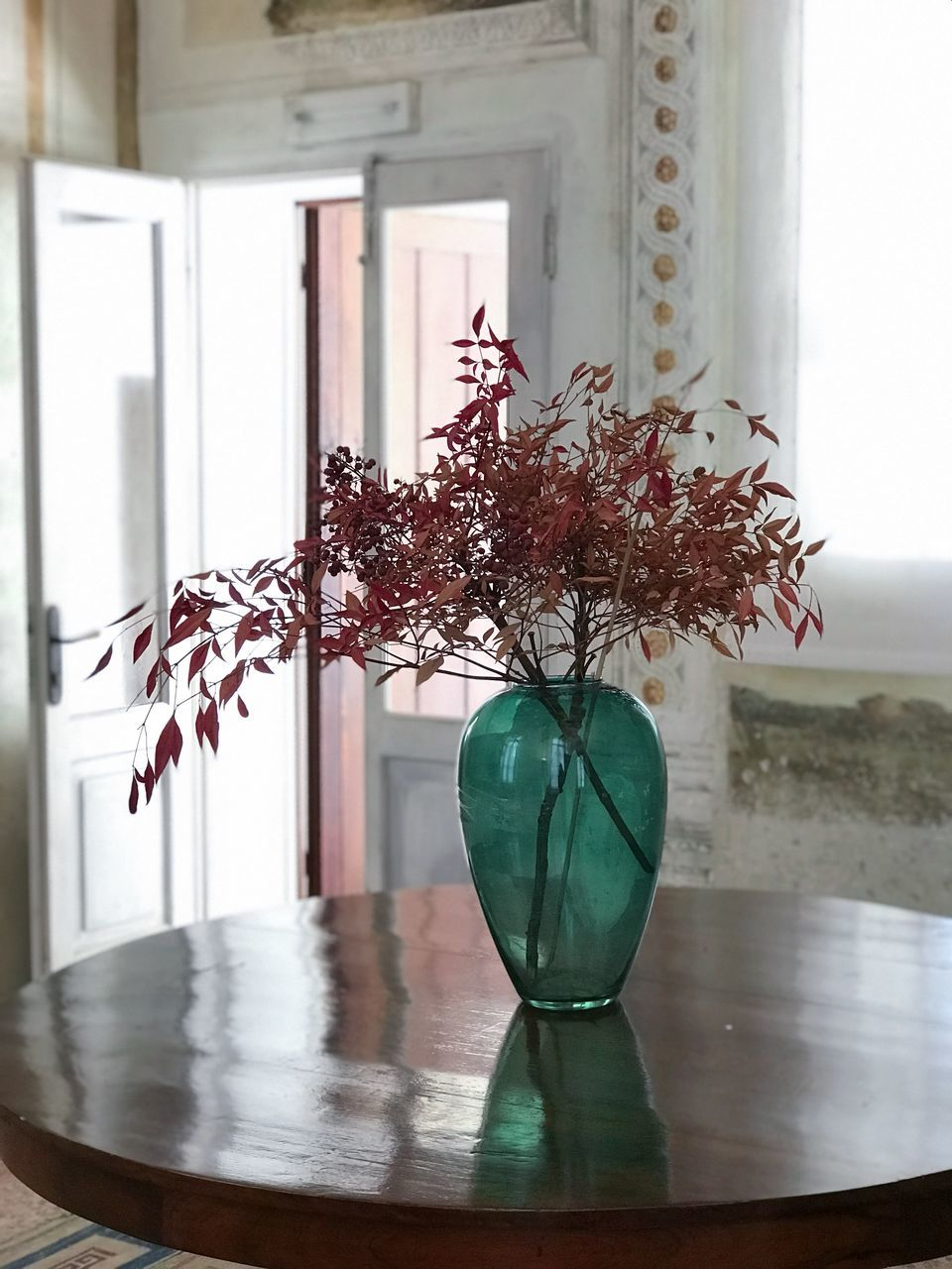 window, plant, no people, indoors, glass - material, table, nature, architecture, vase, day, home interior, flower, built structure, flowering plant, growth, fragility, focus on foreground, transparent, decoration