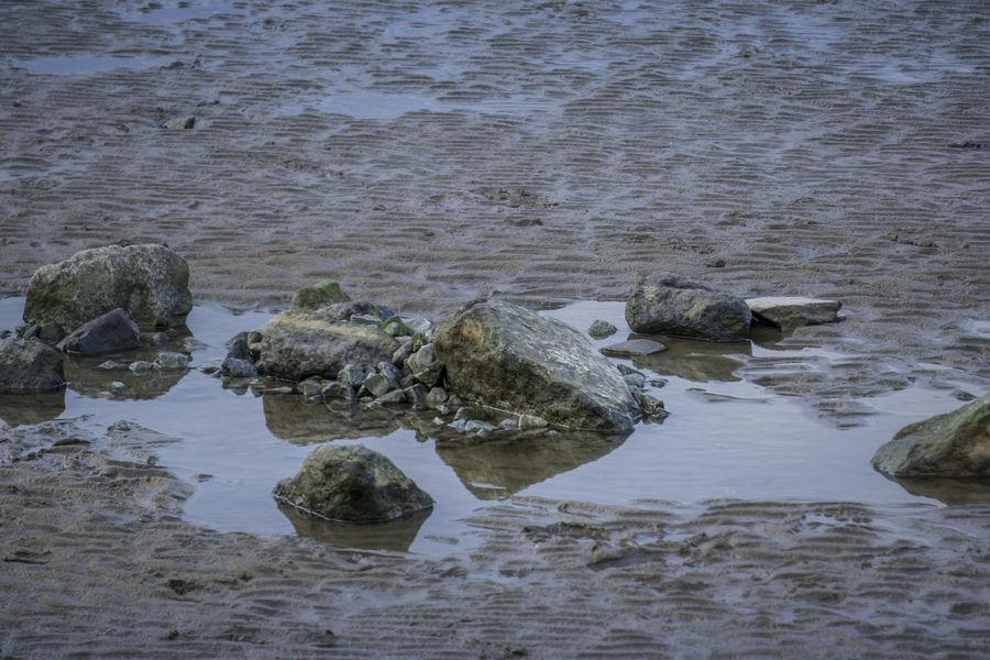 Atlantic Atlantik Costa Deutschland Atlantico Beauty In Nature Day Elba Elbe Germania Germany Küste Mammal Mare Del Nord Nature No People Nordsee Northsea Otterndorf Outdoors Rock - Object Sea Water