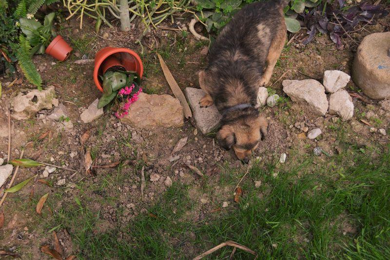 Beatiful Dog Beaty Dog Dog Dog Love Dog Lovers Dogs I Like Dog My Dog Is My Life ❤️ Naughty Dog In The Snow Pet Wild Sog