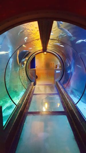 Sealife Indoors  Built Structure Architecture Illuminated No People Futuristic Day