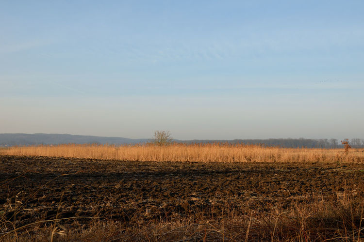 Field and reeds