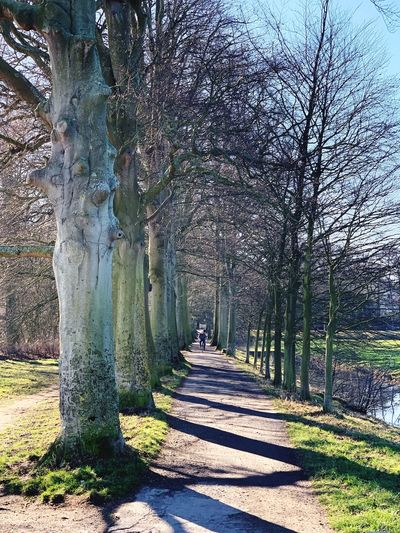 Tree Plant Direction The Way Forward Tree Trunk Trunk Nature Day Footpath Sunlight Bare Tree Tranquility Growth Beauty In Nature Land Tranquil Scene Park No People Outdoors Treelined Diminishing Perspective