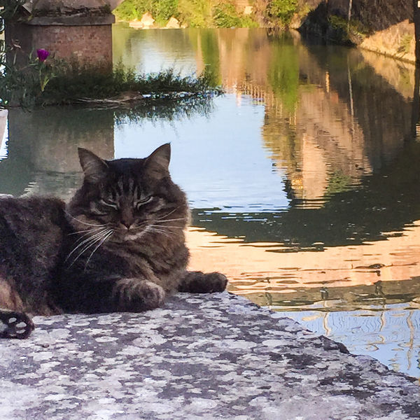Domestic Pets Mammal Animal Themes Animal Domestic Animals Domestic Cat Cat Vertebrate Feline One Animal Portrait Sitting No People Relaxation Nature Looking At Camera Water Reflection Whisker