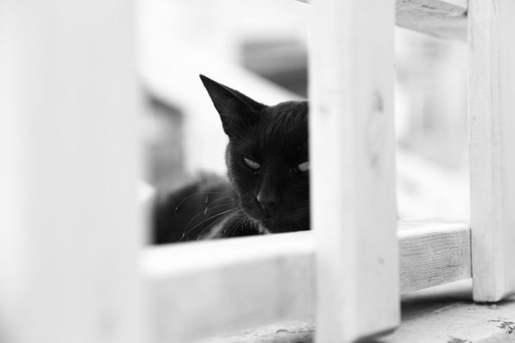 black cat Animal Themes Black And White Photography Black Cat Blackandwhite Cat Cat In Santorini Close-up Day Domestic Animals Domestic Cat Mammal Pets