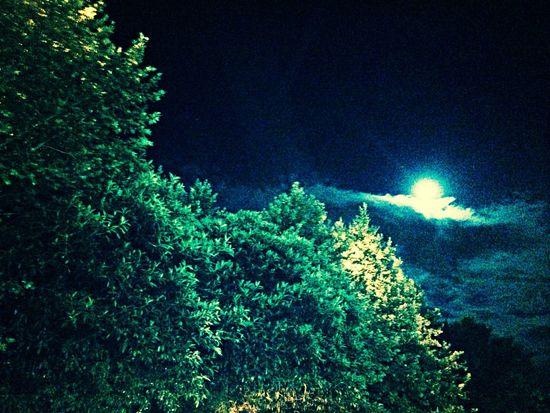 Cool Campomarino night