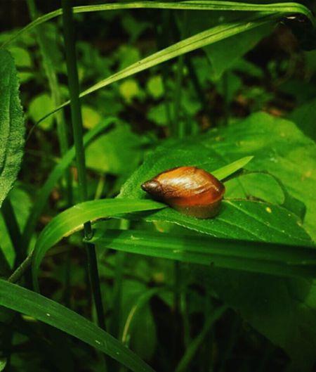 Snail by the bend Snail Riverbend First Eyeem Photo