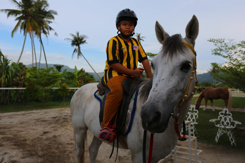 Horse Horse Riding Leisure Activity Person Vacations