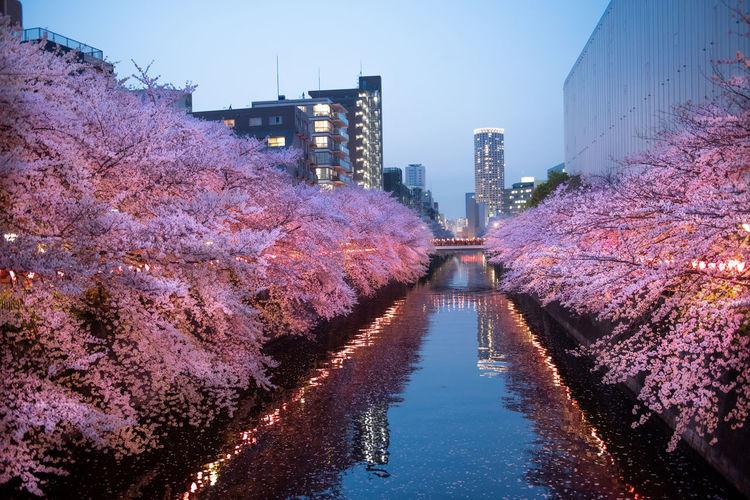 Photo taken in Meguro, Japan