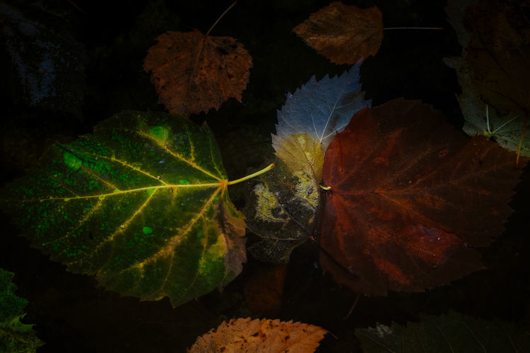 Close-up of autumn leaf on water