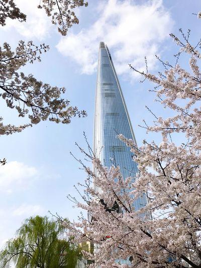 123F 556.5m seoul lotte world tower Built Structure Architecture Skyscraper Lotte World Tower Outdoors Day