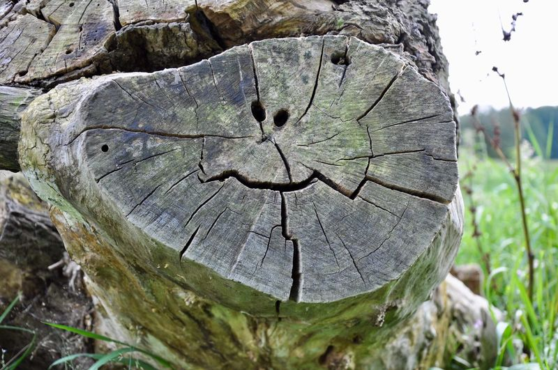 Smile! Tree