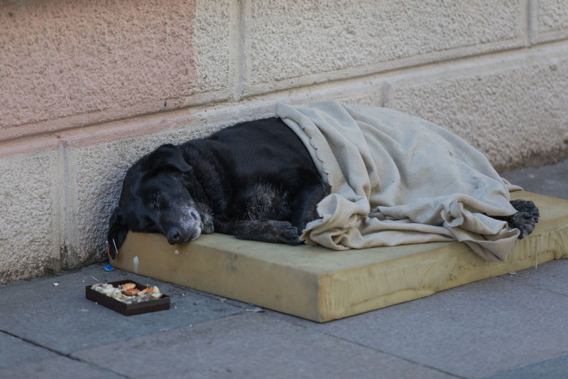 Homeless Dog Istanbul Canine Domestic Mammal Domestic Animals Pets One Animal Relaxation Lying Down Vertebrate Sleeping Resting No People Black Color Puppy Day Young Animal Social Issues