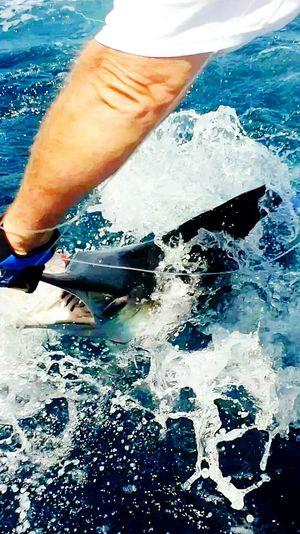 Marlin Marlin Fishing Offshore Samsung Galaxy S5 Saltlife Big Game Fishing Sportfishing Bluewater