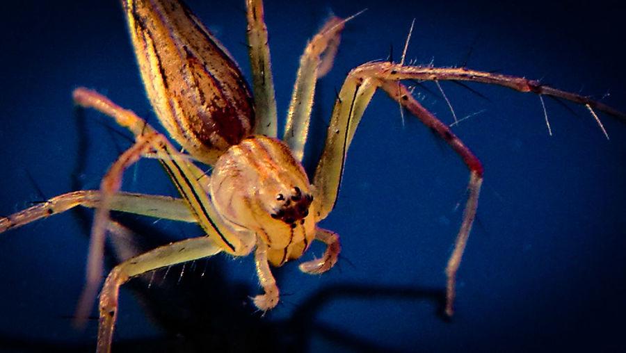 Macro spider.