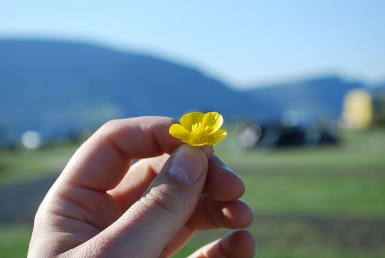 Cropped hand of person holding small yellow flower on field