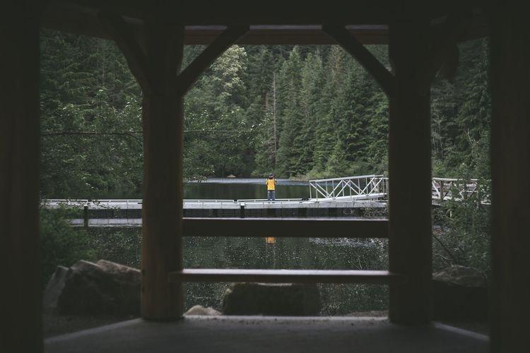 Bridge over railroad track in forest