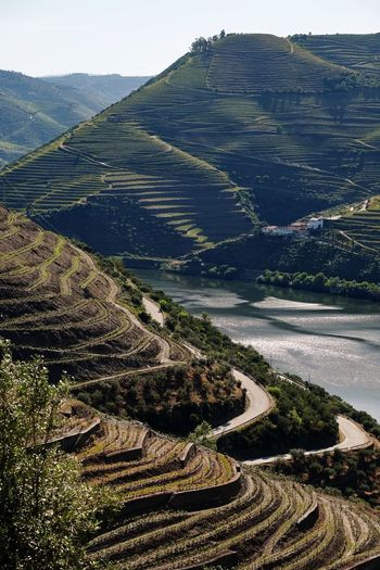 Vineyards on the River Douro Portugal Vinyard Scenics - Nature Beauty In Nature Tranquility Tranquil Scene Landscape Land Nature Mountain Environment Water Non-urban Scene Agriculture Rural Scene Outdoors