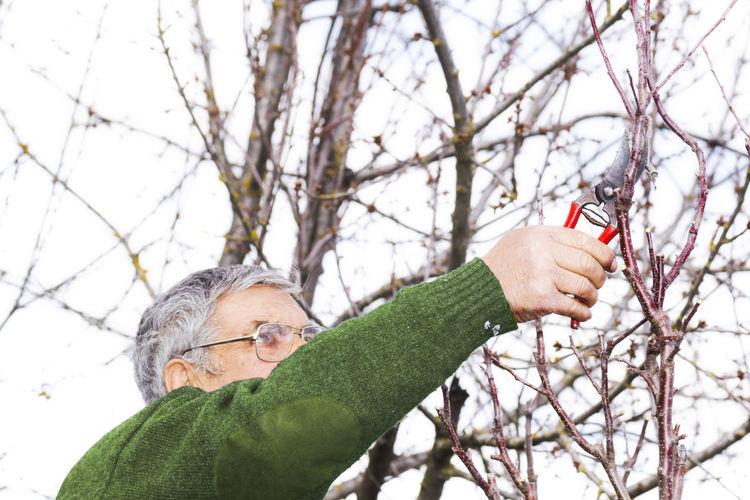 Senior man cutting bare tree branch