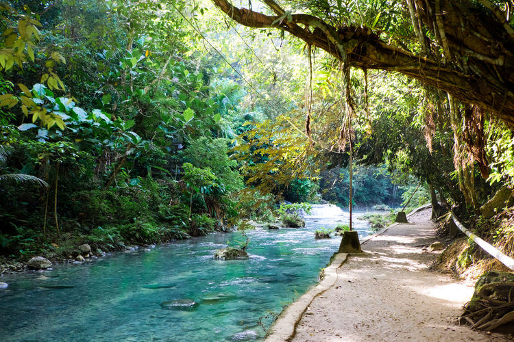 Kawasan Falls near Moalboal on Cebu Island. Kawasan Falls Cebu Moalboal Paradise Philippines Waterfall Nature Beauty In Nature Tranquility Water