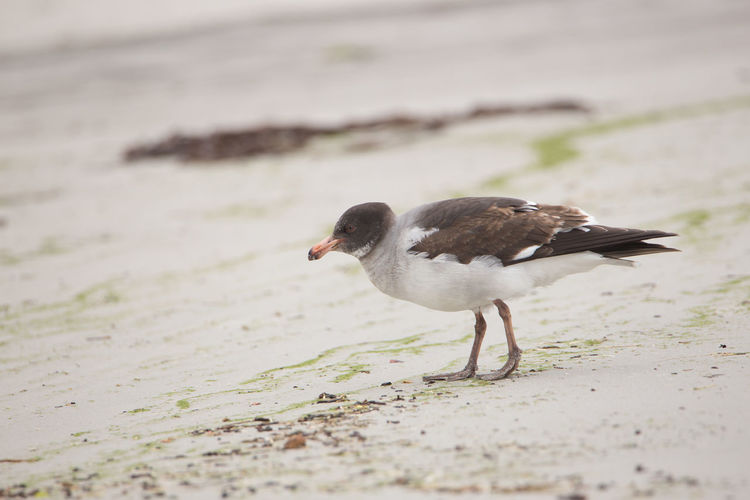 Close-up of a bird on beach
