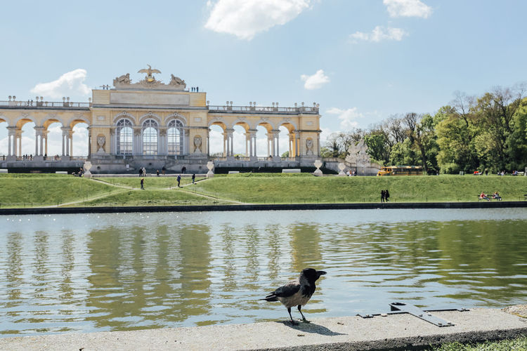 Water Architecture Built Structure Animal Themes Animal Sky Bird Nature Building Exterior Day Reflection Travel Destinations One Animal Lake Plant Animal Wildlife No People Outdoors Summer Gloriette Vienna