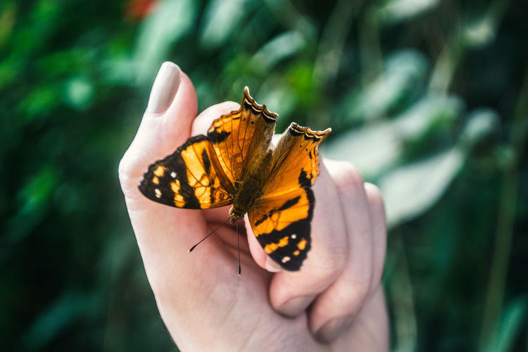 Cropped hand of woman with butterfly against plants