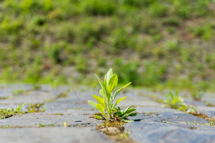 Close-up of a little growing plant. 🌱 Asphalt Blooming Chlorophyll Earth Green Ground Growing Growth Little Nature Outdoor Photosynthesis Plants Small Soil Stones